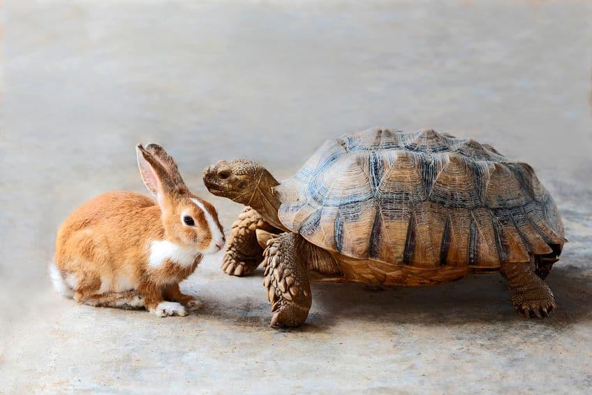 """名誉挽回!""""ウサギとカメ""""の続編""""負けウサギ""""がおもしろいという雑学まとめ"""