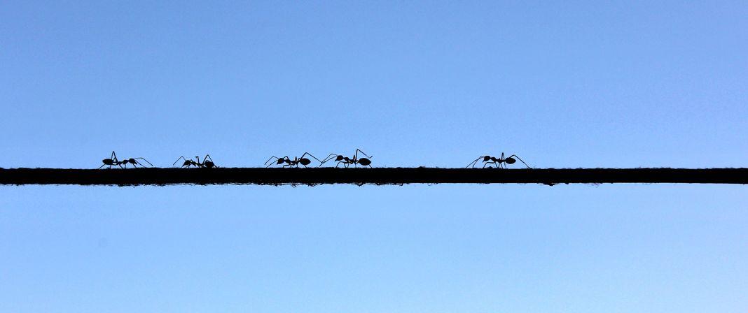 アリが1万m上空から落下しても死なない理由に関する雑学