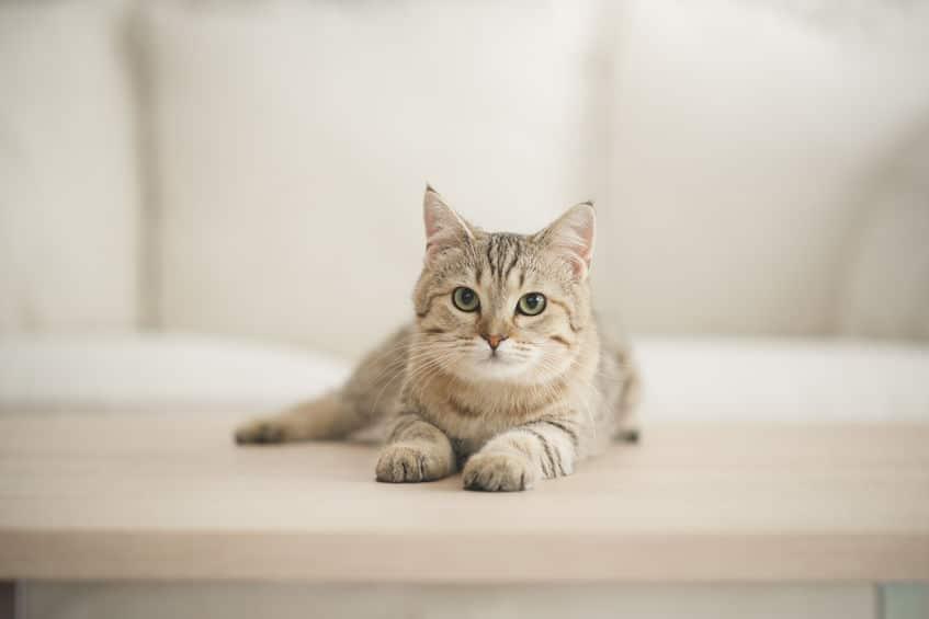 猫の血液型はほとんどA型でB型はレア!O型の猫は存在しないんですというトリビアまとめ