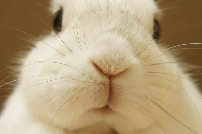 「ウサギは寂しがりや」は本当という雑学