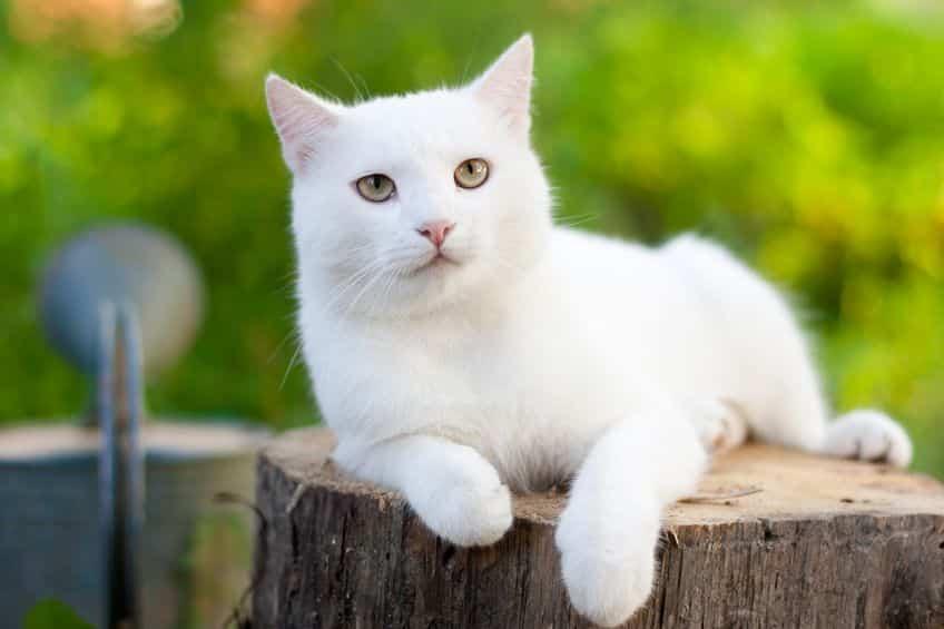 猫の名前の「たま」はどんな由来?というトリビア