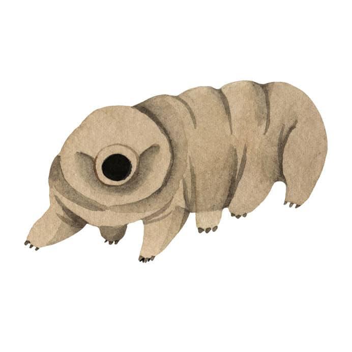 クマムシの「乾眠」状態はマジで最強というトリビア