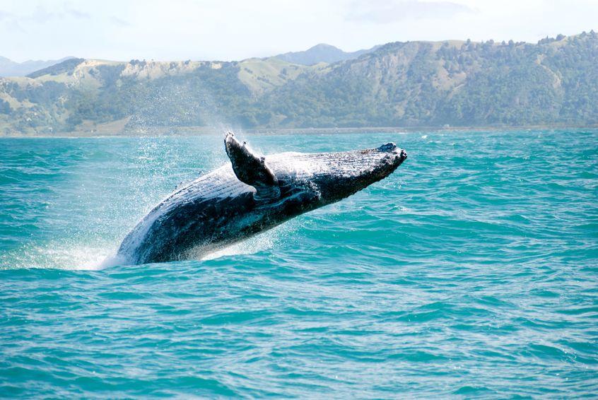 クジラが陸で生きられない理由は2つあるというトリビア