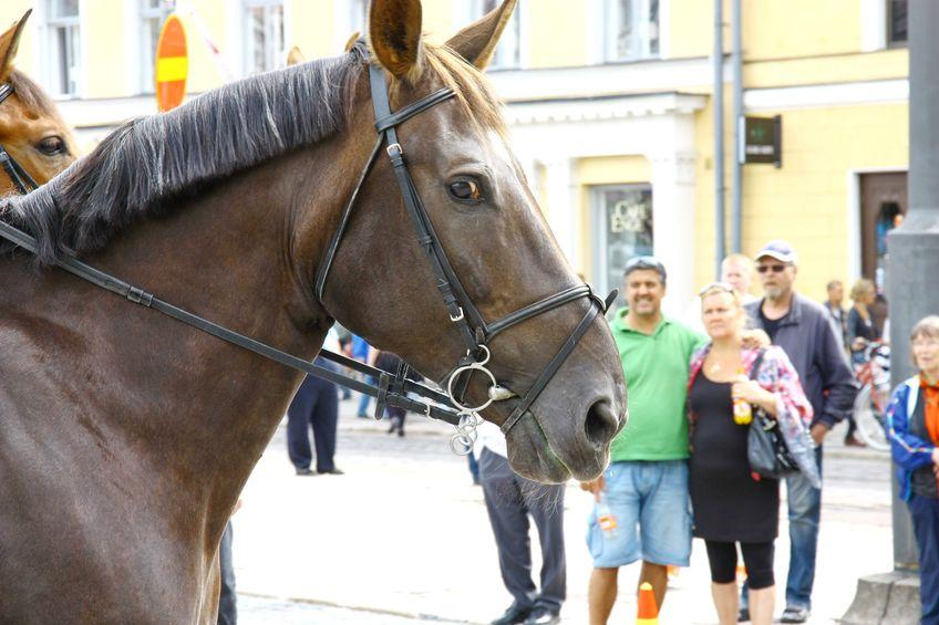 馬の扱いは自転車と同じなため公道も走ってOK!というトリビア
