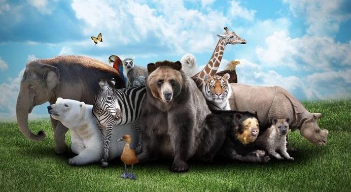 人間のせいで…!悲しすぎる理由で絶滅した動物たちについての雑学まとめ