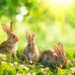 昔ウサギは鳥だと思われていた!という雑学