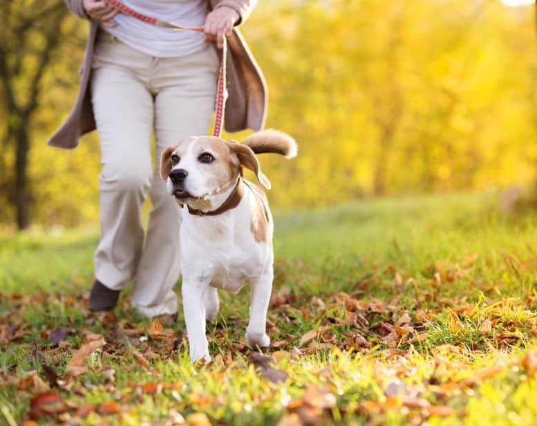 """外国由来だった!日本の犬の名前に""""ポチ""""が多い理由についての雑学まとめ"""