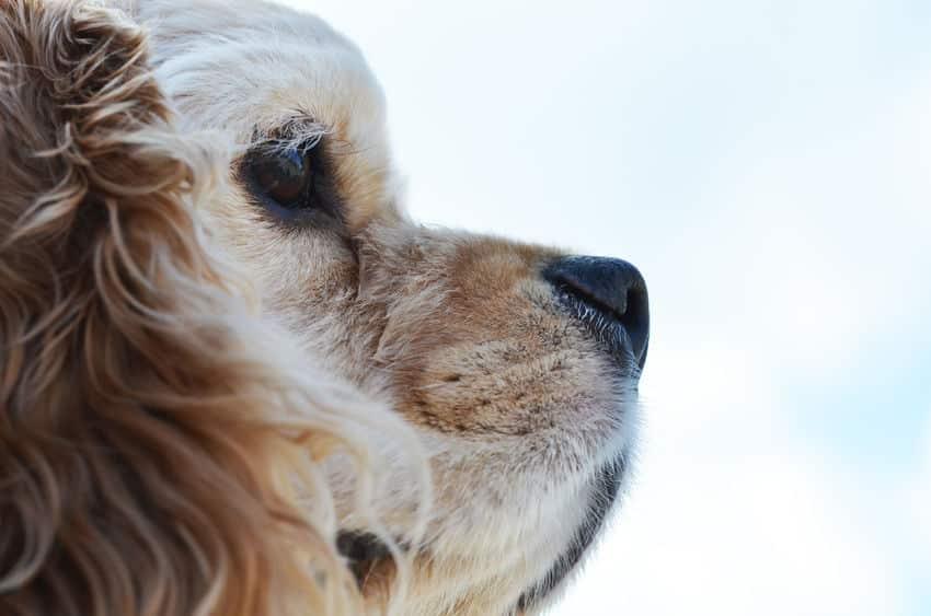 犬の鼻が濡れている理由は?に関する雑学