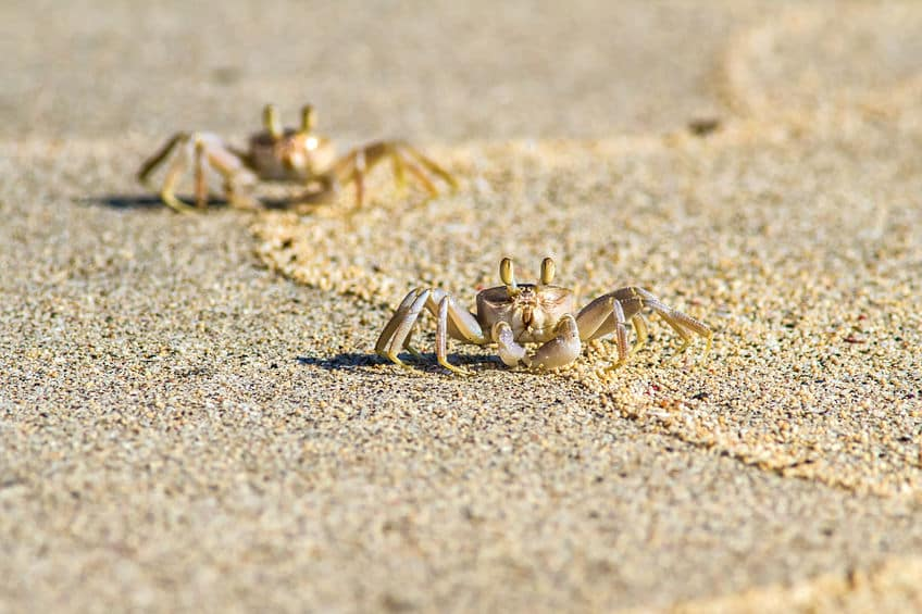ひしめき合うように生えている脚は、前や後ろに出しづらいというトリビア