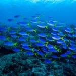 魚も溺死するという雑学
