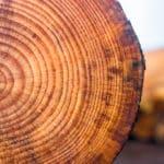 木の年輪はどのようにできる?に関する雑学