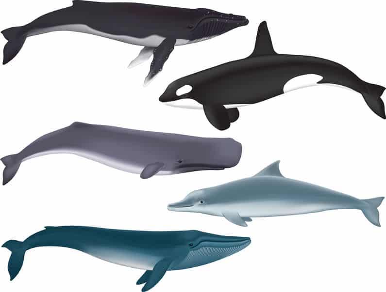 クジラとイルカの違いに関する雑学