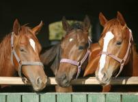 馬の血液型は3兆種類以上あるという雑学