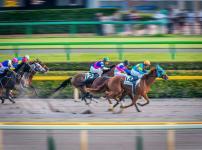 競馬の「サラブレッド」は胃潰瘍になる?という雑学