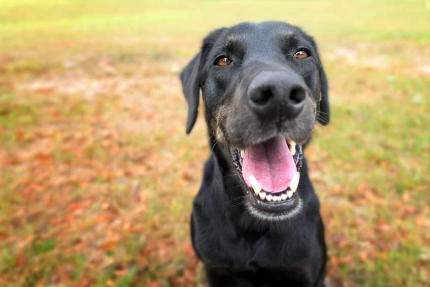 嗅覚の情報量がスゴい!犬の鼻が濡れている理由についてのトリビア