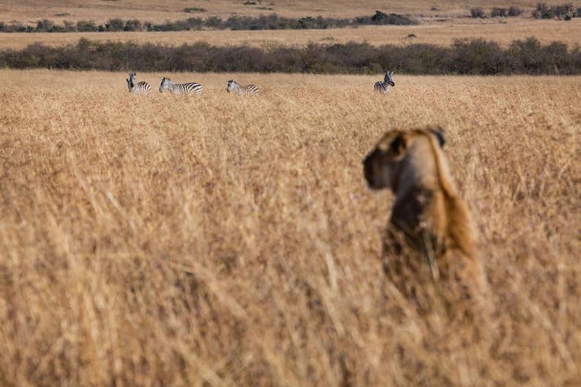 肉食動物と草食動物の違いに関する雑学