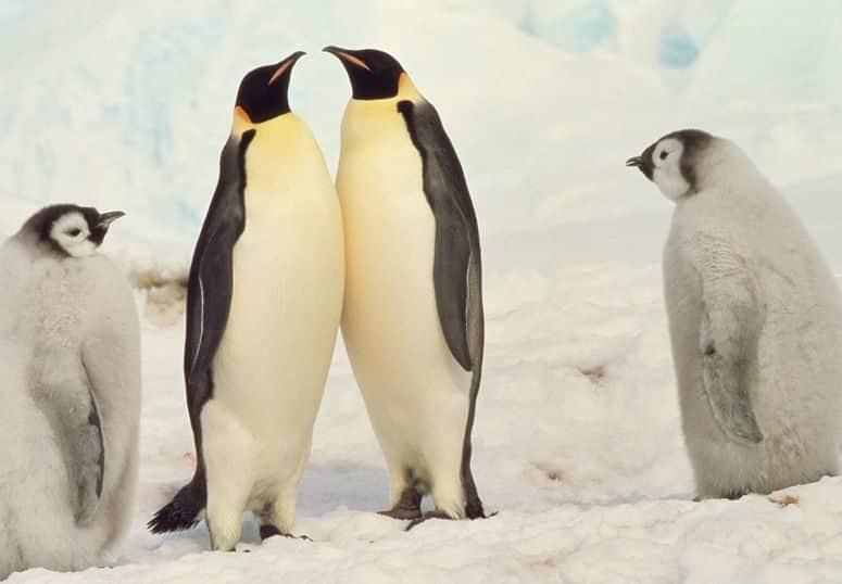ペンギンは空を飛んでいたという雑学