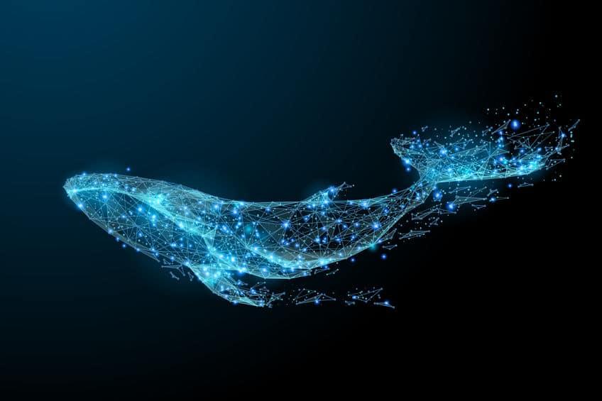 地球最大の動物!シロナガスクジラの巨大すぎる生態に迫りますという雑学まとめ