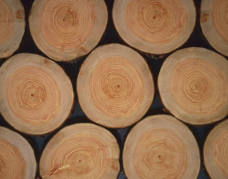 木の年輪形成の仕組み!年輪には季節が関係しているというトリビア