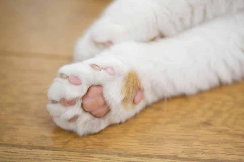ネコは肉球と鼻でしか汗をかけないという雑学
