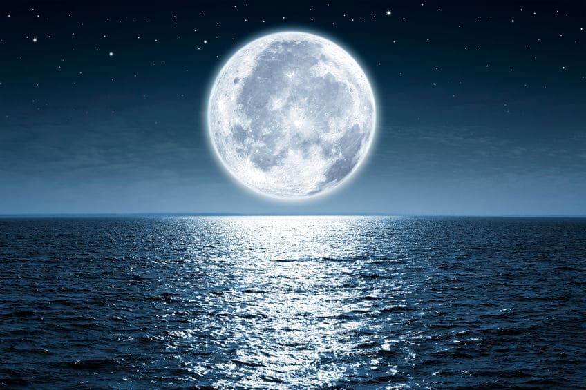 ウミガメやサンゴが満月の夜に産卵する理由についてのトリビア