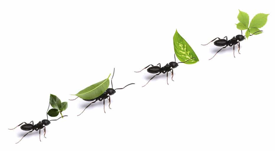 人間も真似したい…。アリの行列が渋滞しない理由についての雑学まとめ