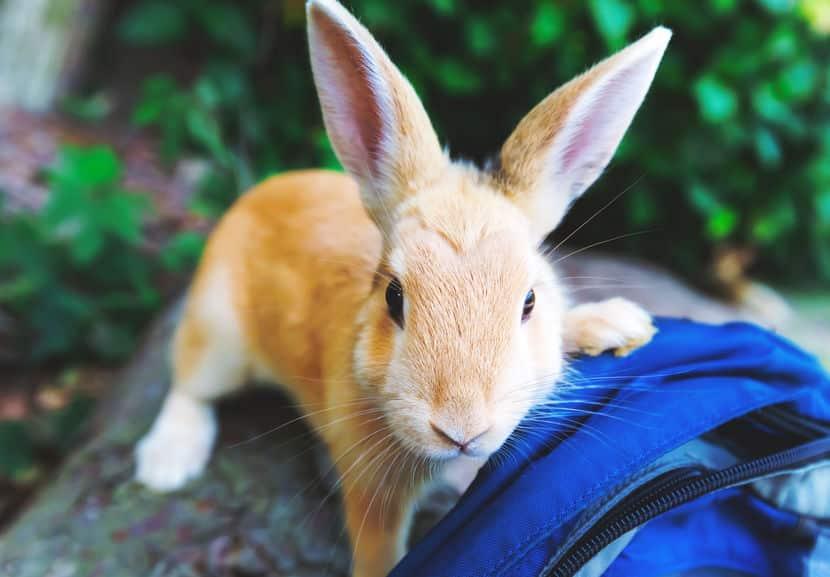 ウサギの寂しさに気づいてあげようというトリビア