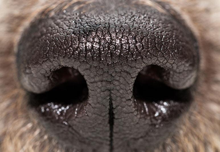 犬の嗅覚は人間の100万倍!?についてのトリビア