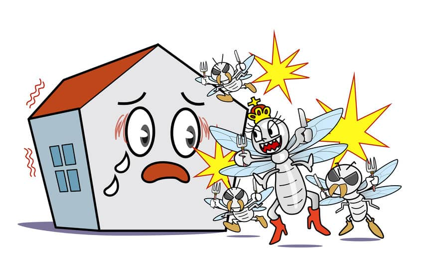 シロアリはアリの仲間ではなくゴキブリの仲間という雑学