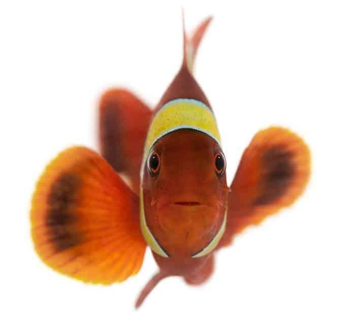 魚には鼻の穴が4つあるという雑学