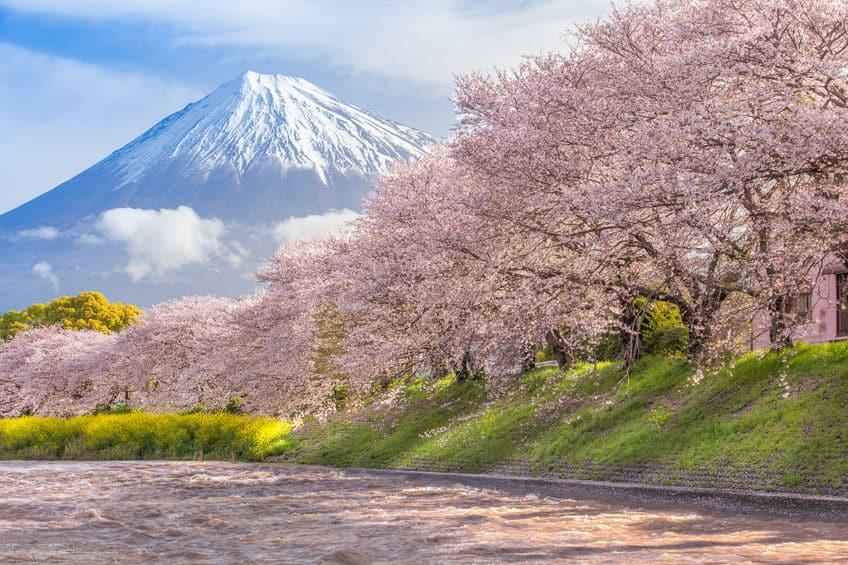 """日本だけ!海外にも桜はあるけど""""お花見""""はないんですという雑学まとめ"""