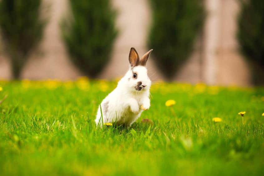 ウサギの名誉挽回ストーリーについてのトリビア「