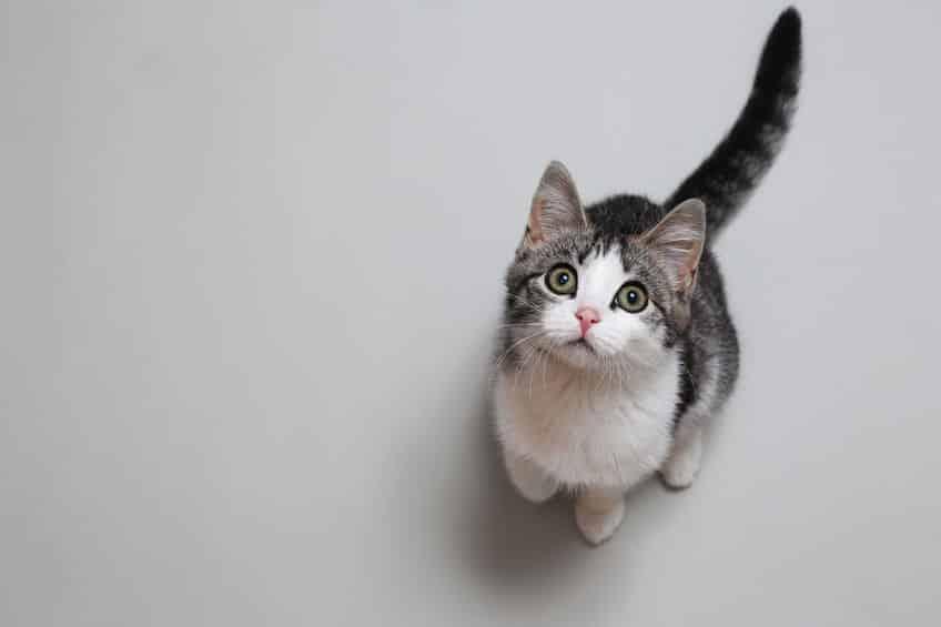 「猫の様子」説についてのトリビア