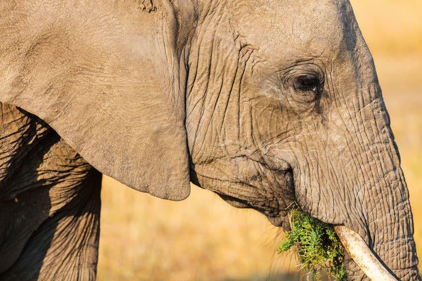 草食動物は肉を食べられるというトリビア