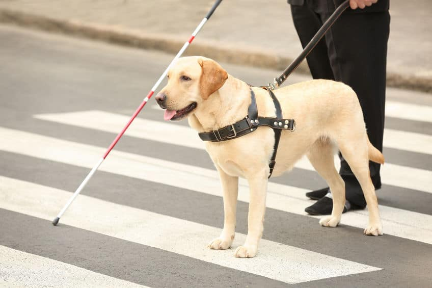 パートナーと盲導犬、お互いの協力で信号を判別し道路を渡るのだ!というトリビア