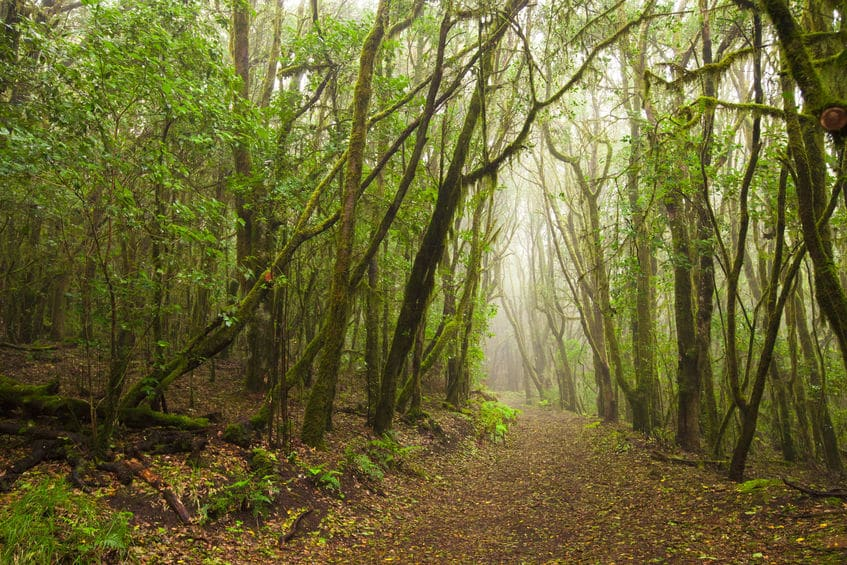 年輪のない木も存在するというトリビア