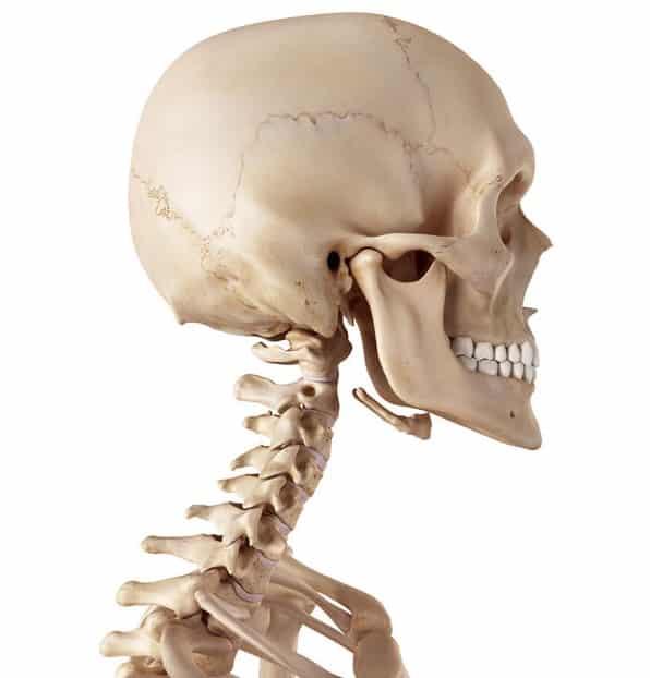 ほ乳類の首の骨の数はだいたい7個というトリビア