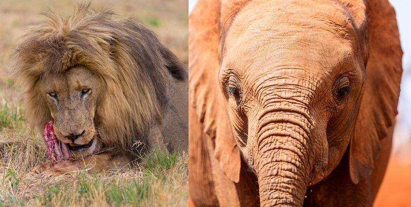 肉食動物の目は前向きで草食動物の目は横向きというトリビア