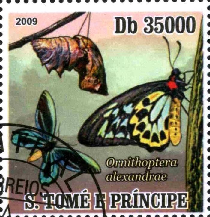 アレクサンドラトリバネアゲハは切手のデザインにも使われたというトリビア
