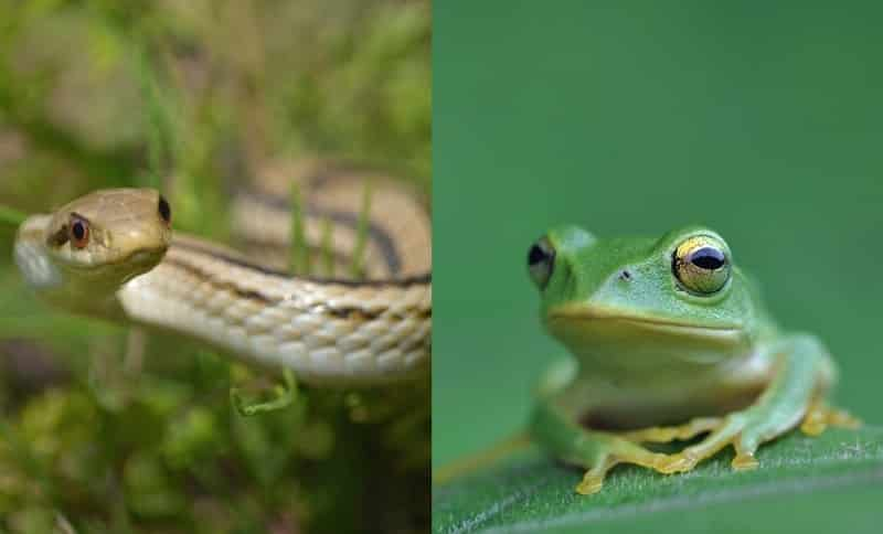 カエルやヘビは虫ではないのになぜ『虫拳』?についてのトリビア