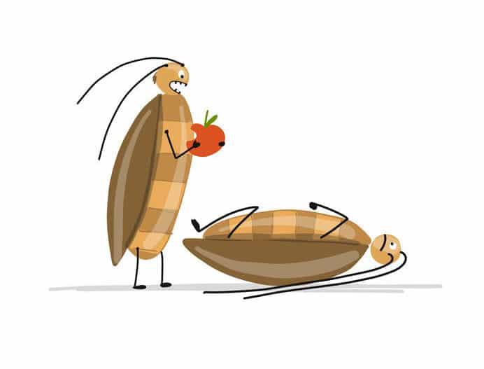 ゴキブリは頭がなくても1週間以上は生きる?という雑学