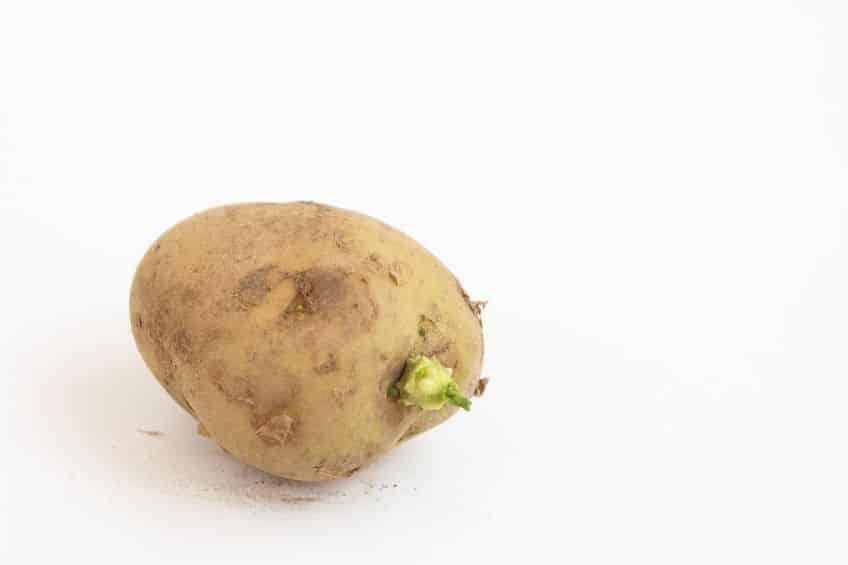 ジャガイモの芽には食中毒を起こす天然毒素が含まれているというトリビア