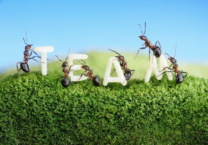働きアリの2割は働かないという雑学