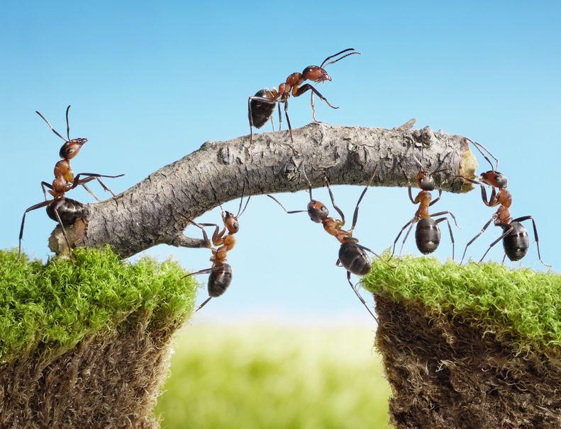 アリが落下しても死なないのには、質量と重力加速度が関係しているというトリビア
