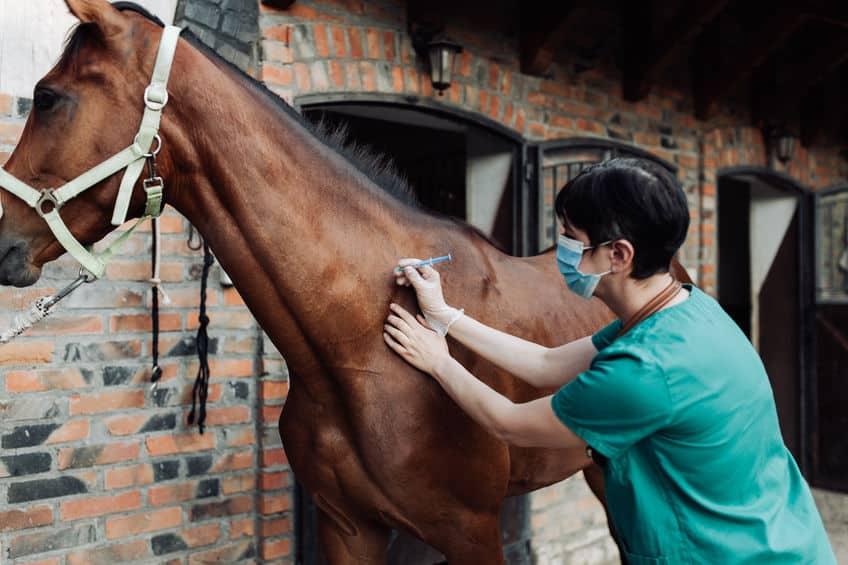 輸血提供専用馬「ユニバーサルドナー」についてのトリビア