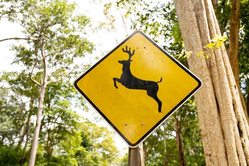 人間を殺す数は、鹿>ワニ&クマ。その理由についての雑学まとめ