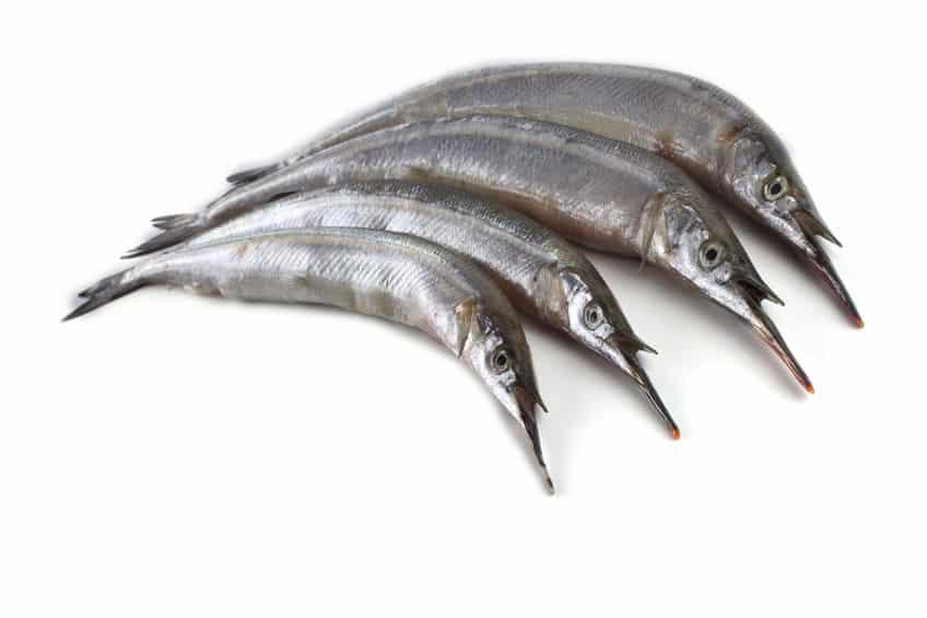 """サメよりヤバい。時速60kmで漁師を殺す魚""""ダツ""""についての雑学まとめ"""