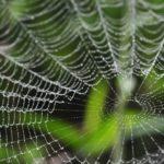 蜘蛛は7種類の糸を使い分けているという雑学