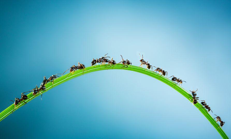 アリが上空1万mから落下しても死なない理由は?人間が生き残る方法はある?についての雑学まとめ