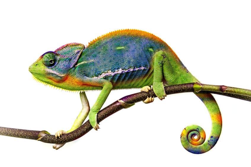 カメレオンはどうやって色を変えている?という雑学